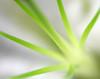 Fresh Green (flopper) Tags: light flower macro translucent interestingness6 flopper interestingness70 interestingness24