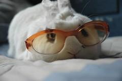 ino taquilla (antitezo) Tags: rabbit bunny glasses conejo lentes anteojos inocencio orejas conelho