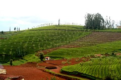 CNR_TO_OOTY-230