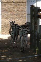 London Zoo #4