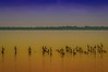 Juan Manuel Swamps National Park on the Lake shore of Maracaibo ... (José Pestana) Tags: america americadelsur americaamérica amerika américa américadelsur américas amérika amérique botanic caribe ciénaga ciénagasdejuanmanuel dabeecadda eðli fotografía fotografíadigital green indalo iseda josépestana jungle lagodemaracaibo laguna mar natura naturaleza nature océano océanoatlántico paises parque parquenacionalciénagasdejuanmanuel photography sony sonynex sonynex6 southamerica sudamérica suramerica suramérica tabiat toetra venecuela venetiola venetsueela venezoela venezuela venezwela venezyela verde wenezuela zulia βενεζουέλα амерыка природа судамерица վենեսուելան أمريكا भेनेजुएला আমেরিকা ਵੈਨੇਜ਼ੁਏਲਾ වෙනිසියුලාව အမေရိကတိုက် ვენესუელა ベネズエラ 印第安委員會 委內瑞拉 베네수엘라