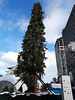 Montreal Ugly Christmas Tree (Exile on Ontario St) Tags: ugly montreal christmas tree sapin noël laid sad sapinlaid fir arbre canadiantire laughingstock laughing stock risée ridicule centreville downtown honte embarrassment shame city mocked deniscoderre denis coderre sapinmtl uglytree mayor canadian tire marchédenoël market marché xmas holidays fêtes big high charliebrown beautiful charlie brown laugh mock large grand haut baumier balsam joke jokes baumierviralrockefellercentersprucedecorationtriangletaxpayersmarketingployplace des arts place scorn pda québec horreur awful ugliness laideur terrible quebec mistake noel
