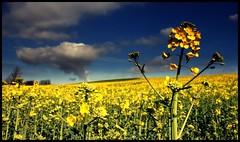 (andrewlee1967) Tags: england landscape andrewlee supershot canon400d andrewlee1967 andylee1967 focusman5