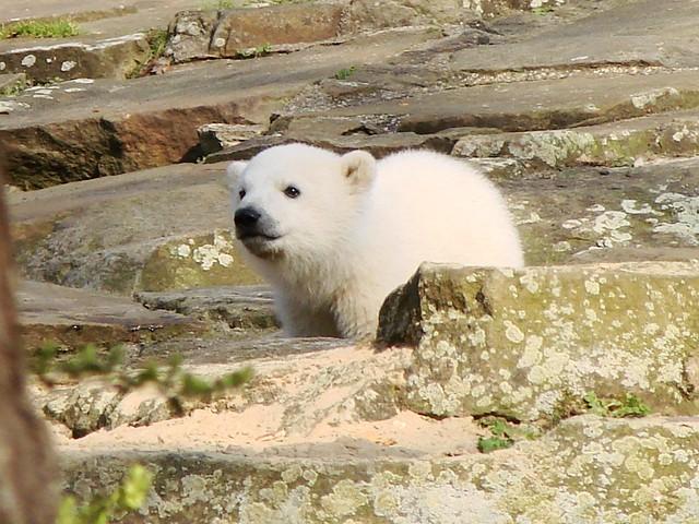 Mein schönstes Knut Foto