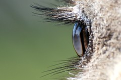 Ostrich - zoo ostrich shots zsl picturethis eyelashes whipsnade whipsnadezoo