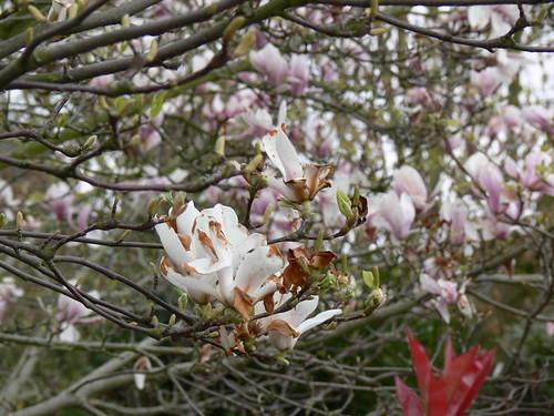 Magnolia Bakery_10