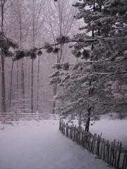 Zlatibor in winter (Ma_Ya 's) Tags: trees winter white snow zlatibor