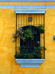 window in Antigua (Z Eduardo...) Tags: city blue flower window yellow town guatemala unesco worldheritagesite antigua latinoamerica centralamerica peopleschoice supershot amazingtalent mywinners colorphotoaward superaplus aplusphoto superhearts
