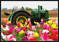 Wooden Shoe Tulip Festival (Misserion) Tags: flowers oregon catchycolors tulips johndeere woodburn woodenshoetulipfestival