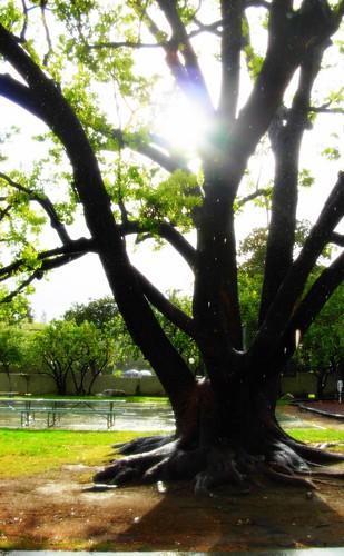 a climbin' tree