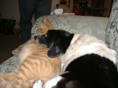 Billy the dog with Miss Orange (lgsinden) Tags: dog cat goofycat goofycats