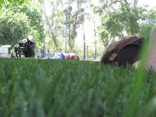 Grass, napping, wheelchair