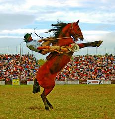 Saludando (Eduardo Amorim) Tags: horses horse southamerica caballo uruguay cheval caballos searchthebest cavalos prado montevideo pferde cavalli cavallo cavalo gauchos pferd hest hevonen chevaux gaucho  amricadosul montevidu hst uruguai gacho  amriquedusud  gachos  sudamrica suramrica amricadelsur  sdamerika jineteada   americadelsud gineteada  americameridionale goldenphotographer mo12 semanacriolla semanacriolladelprado eduardoamorim