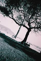 (Luiz Franco Jr.) Tags: sea blackandwhite dog sun men sol co praia beach water children mar sand pessoas day shadows areia clown banco dia sidewalk heat ash persons arvore casal litoral homem cinza pretoebranco sombras palhao calor calada criaa luizfrancojr aguacoast