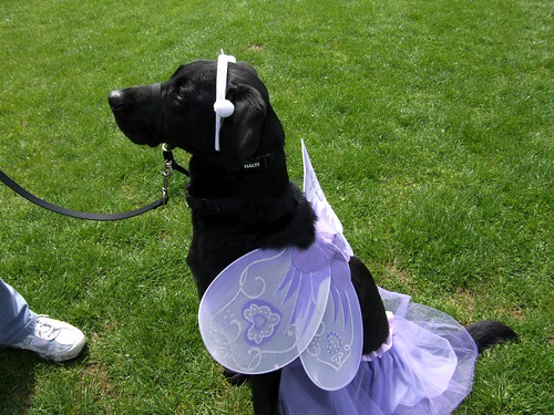 Black Butterfly -- walk cancer dog dogs event dogswalkforcancer dogswalk puppies butterfly black