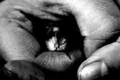 Nose! - by Krisztina Tordai