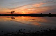 Springbrook Prairie Sunset (D_C_D) Tags: sunset nature illinois prairie forestpreserve naperville springbrook dupagecountyforestpreserve springbrookprairie serenetynow