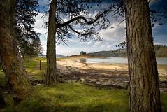 Tioram Castle (gms) Tags: castle scotland postcard scenic lochaber spamspamspam moidart tioram stillnotmontypython spammityspaaaaam