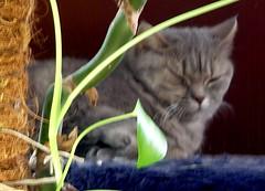 Weekend Cat Blogging #101