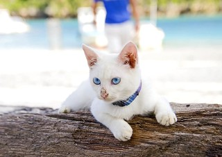 She has same color eyes as the Sea