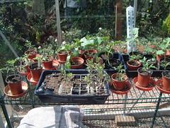 070505-greenhouse014
