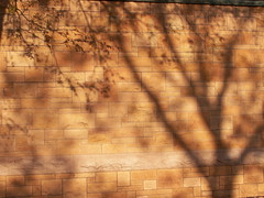 wall shadows 2 (Mamluke) Tags: sun sunlight tree church minnesota rock stone wall architecture de pared arquitectura shadows pierre or wand unity edificio iglesia kirche stpaul boom chiesa rbol architektur tageslicht sunlit dor albero mur costruzione pietra parete stein arbre gouden glise btiment kerk baum gebude architettu