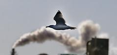 Volando entre humos - by pericoterrades