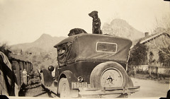 vintage: two dogs resting on top of an old car (deflam) Tags: old arizona mountain west dogs car vintage ray licenseplate firehydrant western resting 1928 miningtown teapotmountain