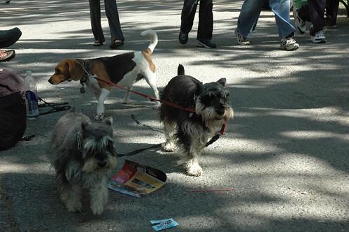 Dog Walk Dog World