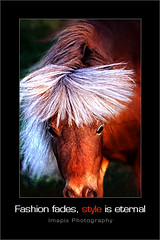 S t y l e (Imapix) Tags: portrait horse nature animal hair photo bravo photographie quality hairdo style pony imapix magicdonkey gaetanbourque colorphotoaward fashionfadestyleiseternal hairstyl haircul imapixphotography gatanbourquephotography