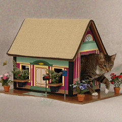 Cat's Playhouse