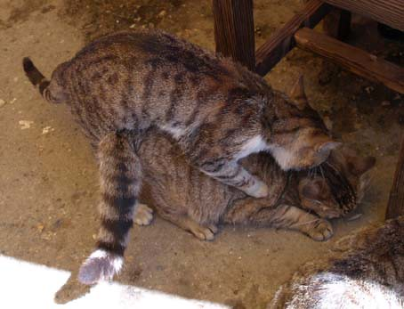 naughtycats