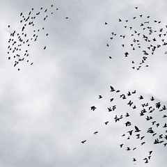 Flocking visualization - by factoryjoe