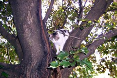 Gunther Climbs Trees