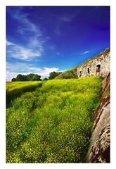 suomenlinna (a field) (miemo) Tags: nature suomi finland landscape helsinki saturated scenery europe highsaturation suomenlinna viapori dopplr:explore=wk41 gettyimagesfinlandq1