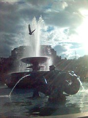 What a difference a day makes (AnnabelB) Tags: uk light bird london water fountain square hope pigeon trafalgar trafalgarsquare nopeople k700i olympics 77 olympics2012 london2012 6july2005 londonbombblasts londonbombings whatadifference twodays mymobile2006