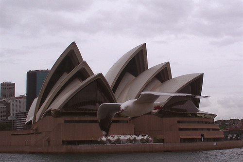 seagull and opera house