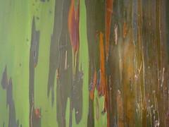DSC01465.jpg (Bit Swizzler) Tags: hawaii tree bark multicoloured