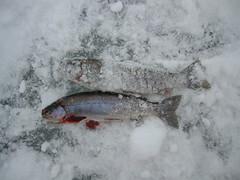 001 (joewils) Tags: kelsolake idaho icefishing