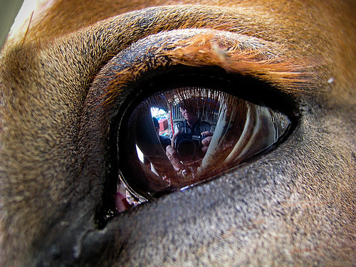 What's in a horse eye?