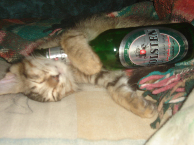 my drunk cat