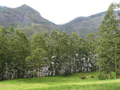 Munnar - wild elephants and family :) (GirlWithBigEyes) Tags: iimk munnar travel wow