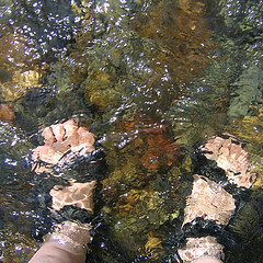 wading into the abstract (fotogail) Tags: california summer abstract mountains feet water creek stream wade wading trinityalps fotogail sfchronicle96hours your300pre2006favesthanks ilobsterit