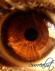 Iris (Surrealist) Tags: iris brown macro eye top20favorites topf50 perfect dubai lashes uae hazel glowing surrealist top20hallfame