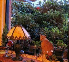 Hoping for a Snack! (rainy city) Tags: window cat ventana orangecat simba catsandwindows