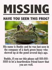 COME HOME, BUDDY, ALL WILL BE FORGIVEN. (pauly...) Tags: funny humor frogs amiko ranas justkidding