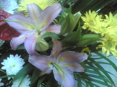 Flowers (AL Nuaimi) Tags: al nuaimi uae dxb dubai digital mobile
