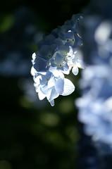 (α) Tags: flower urbannature urbannatureblog