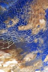 www (Florentijn) Tags: world wide web www spider rateme17 rateme28 rateme39 rateme46 rateme56 rateme66 rateme77 rateme89 rateme97 rateme107 ratemeavarage72