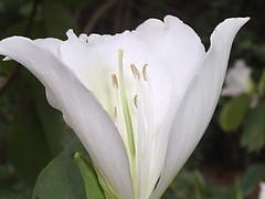 Happy Birthday Rosemea (marlenells) Tags: white flower macro freeassociation dedication topc25 topv111 510fav ilovenature happybirthday top20flower quintaflower lovely marlenells
